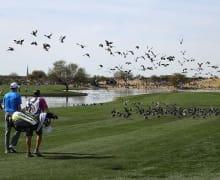 Birdies in Folge