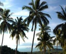 Abschlag Palme