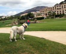 HuGo-Cup, Golfturnier mit Hunden, Golf de Andratx, Camp de Mar