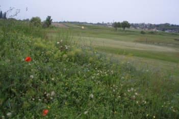 Öko Golfplatz Neusiedler Csarda