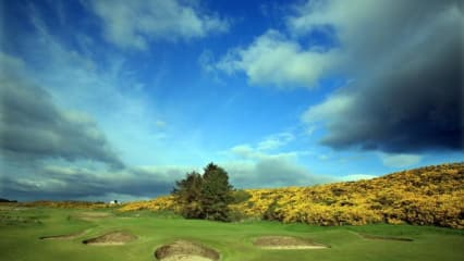400 Jahre Royal Dornoch Golf Club - Schottisches Ginstermonster