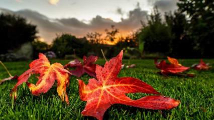 Ein schöner November in der Golf Post App