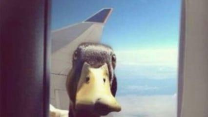 Ente auf Reisen: Die Twitter-Bilder der Woche