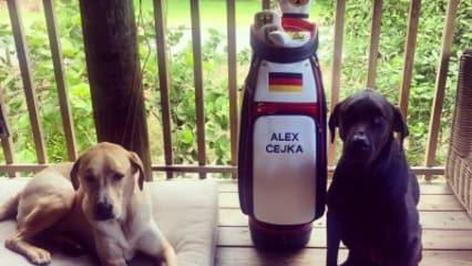 Golfbag Alex Cejka