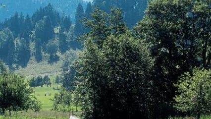 GC Oberstaufen-Steibis