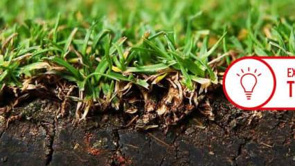 Es gibt verschiedenste Gräsersorten. Nicht jede ist für jeden Bereich des Golfplatzes geeignet. (Foto: Getty)