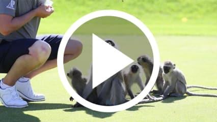 Auf dem Golfplatz geht es häufig tierisch ab - so auch bei der Nedbank Golf Challenge im wilden Südafrika. (Foto: Getty)