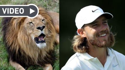 Zwischen Raubtieren und Alphamännchen: Wenn Golf eine Naturdoku wäre