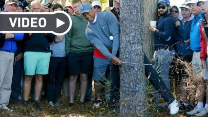 Tiger Woods sorgt immer wieder mit spektakulären Rettungsaktionen für Begeisterung bei seinen Fans. (Foto: Getty)