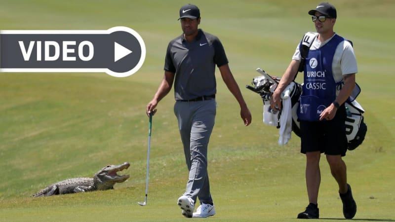 Tiere auf dem Golfplatz: Die witzigsten Momente der Dekade im Video