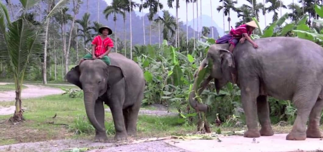 Am nächsten Tag Ihrer Reise (Tag 7) erwartet Sie eine Khao Sok Dschungelsafari. (Foto: Sophisticated Golftours)