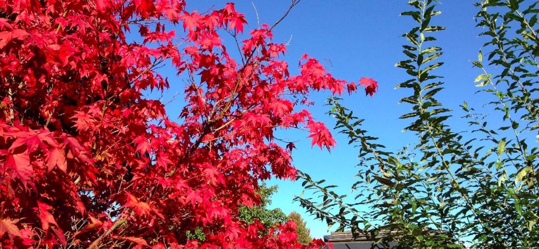 Herbst in Kitzbühel