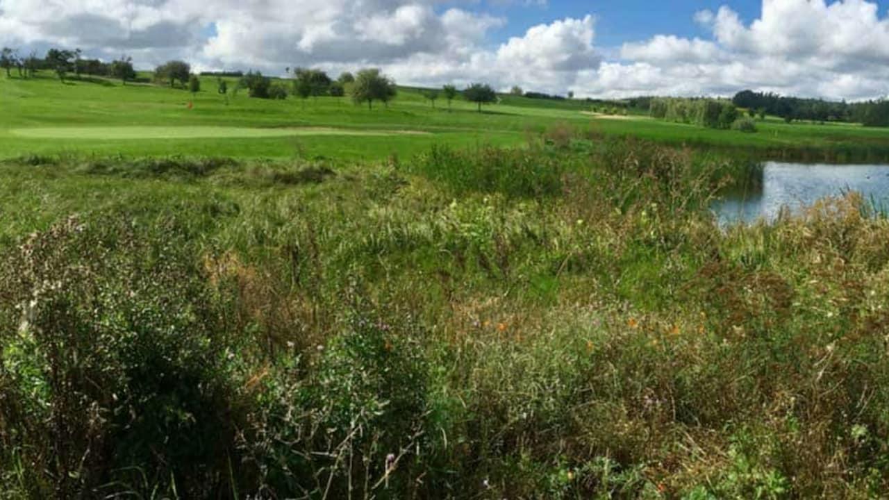 Hier zu sehen: Das Grün von Bahn 9 des Golfpark Rothenburg-Schönbronn. (Foto: 500% Golf; K. Grosse)