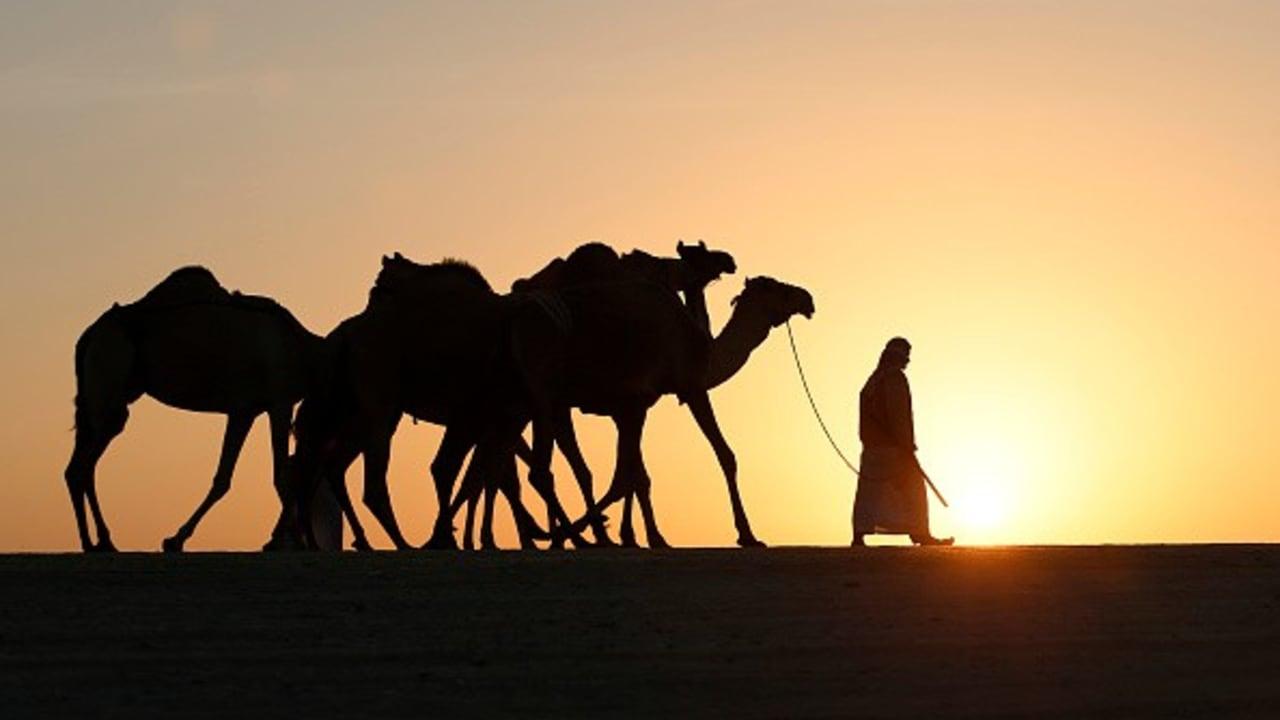 <h2>Karawanen-Romantik</h2> Eine Kulisse wie bei Lawrence von Arabien. Wem die Wolkenkratzer der Metropole von Abu Dhabi zu schwindelerregend werden, dem bietet sich an, gemeinsam mit den arabischen Kamelen über den Dünenkamm zu ziehen. Bei den Paarhufern handelt es sich übrigens um die einhöckrige Variante - auch Dromedar genannt.<br>(Foto: Getty)
