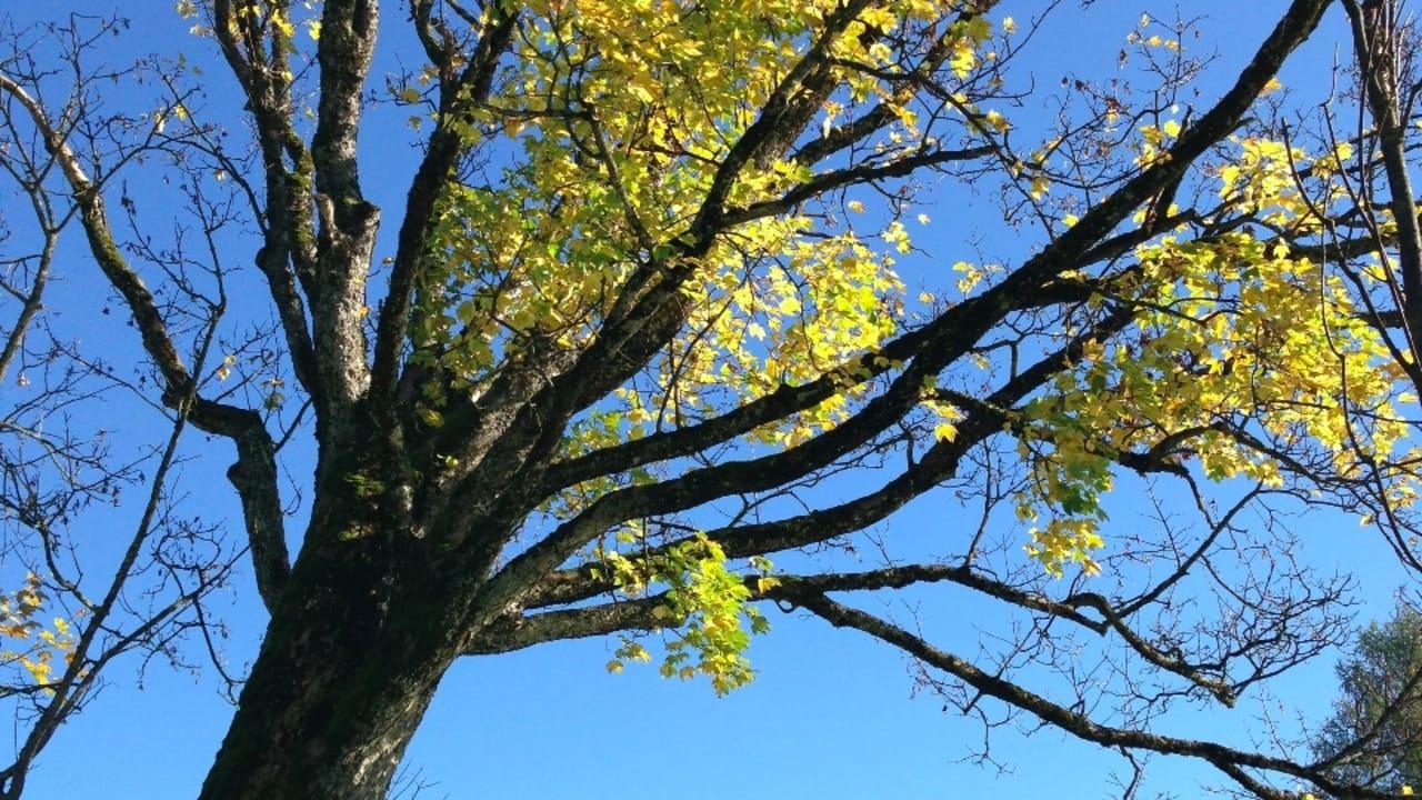 Atemberaubende Landschaft lädt zum Herbstgolf ein.
