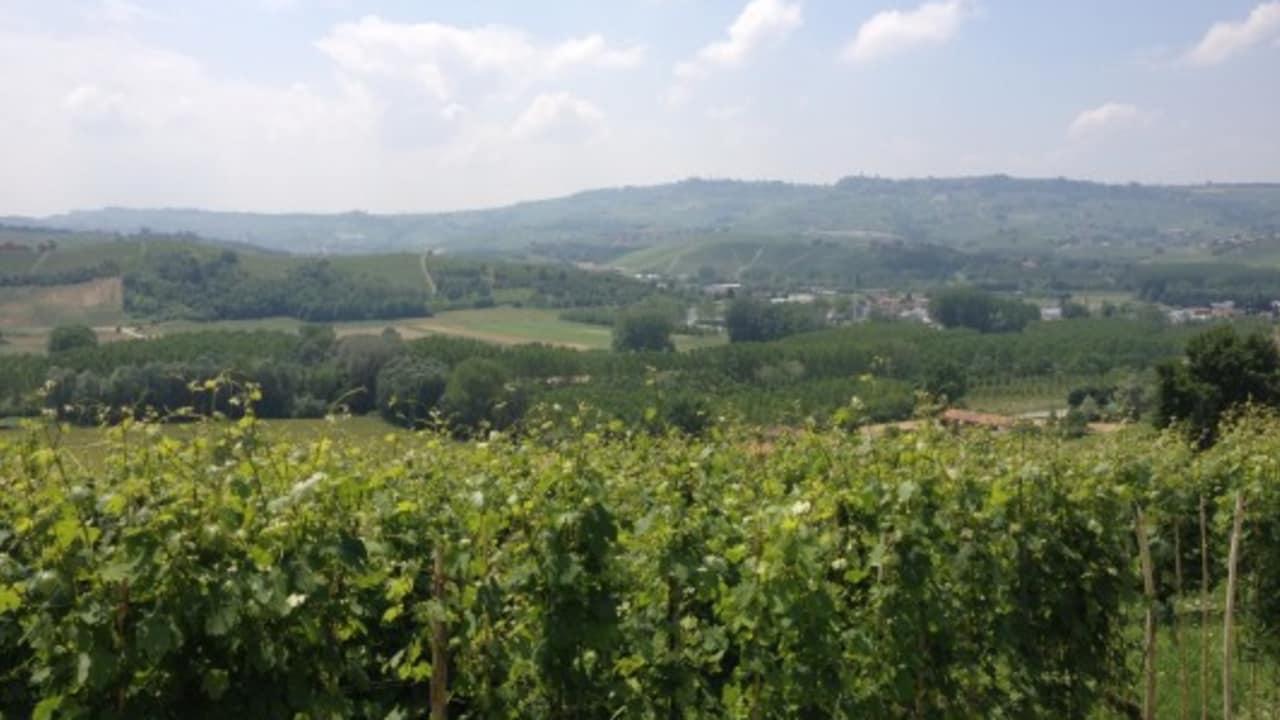 Das ist die typische Landschaft im Piemont. Auf den lang gestreckten Hügeln wächst überall Wein. (Foto: Weihrauch)