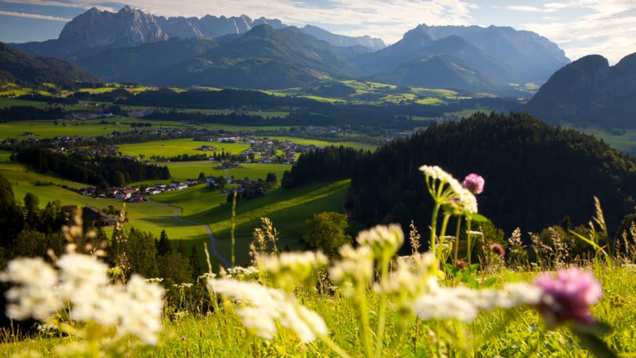 Das Kaisergebirge gliedert sich in den überwiegend aus blankem Kalkfels bestehenden Wilden Kaiser sowie den davon nordseitig gelegenen und südseitig überwiegend mit Bergkiefern (Latschen) bewachsenen Zahmen Kaiser. (Foto: Tourismusverband Kaiserwinkl)