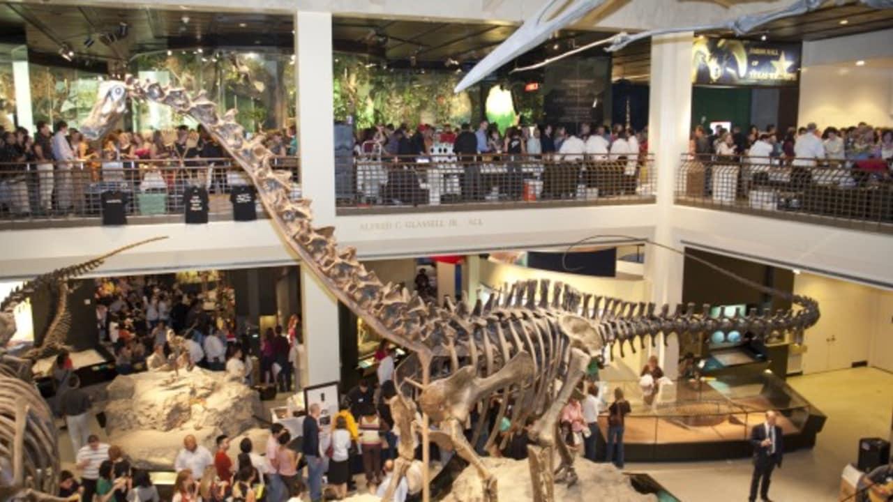 Houston hat daneben viele kulturelle Highlights zu bieten und verfügt über einen riesigen Theater- und Museumsdistrikt. In Downtown befindet sich etwa das Museum of Natural Science, welches Sie mit dem CityPass ebenso wie die bereits genannten Sehenswürdigkeiten besichtigen können. Im Rahmen zahlreicher Ausstellungen widmet man sich hier beispielsweise den Knochen von Dinosauriern, der Rotation der Erde oder ägyptischen Artefakten. Angegliedert ist außerdem ein Schmetterlingshaus. (Foto: Greater Houston Convention & Visitors Bureau)