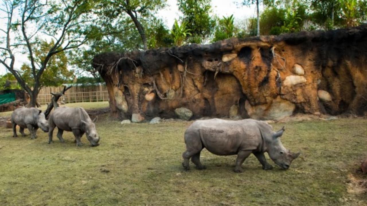 Einen Besuch des Kemah Boardwalks können Sie auch eintauschen gegen eine Stippvisite im Zoo der Stadt, welcher zu den zehn meistbesuchten Tierparks der USA gehört und über 6000 Tieren ein Zuhause gibt. Hier wird besonders viel Wert auf die Erhaltung bedrohter Tierarten gelegt wie beispielsweise des Nashorns oder der Galapagos-Schildkröte. (Foto: Greater Houston Convention & Visitors Bureau)