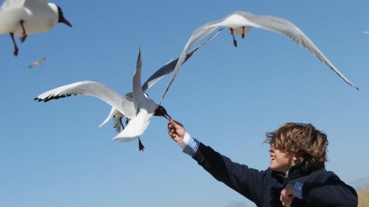 <h2>Immer dabei</h2> Die Möwen freuen sich auf die Besucher an der Ostseeküste.