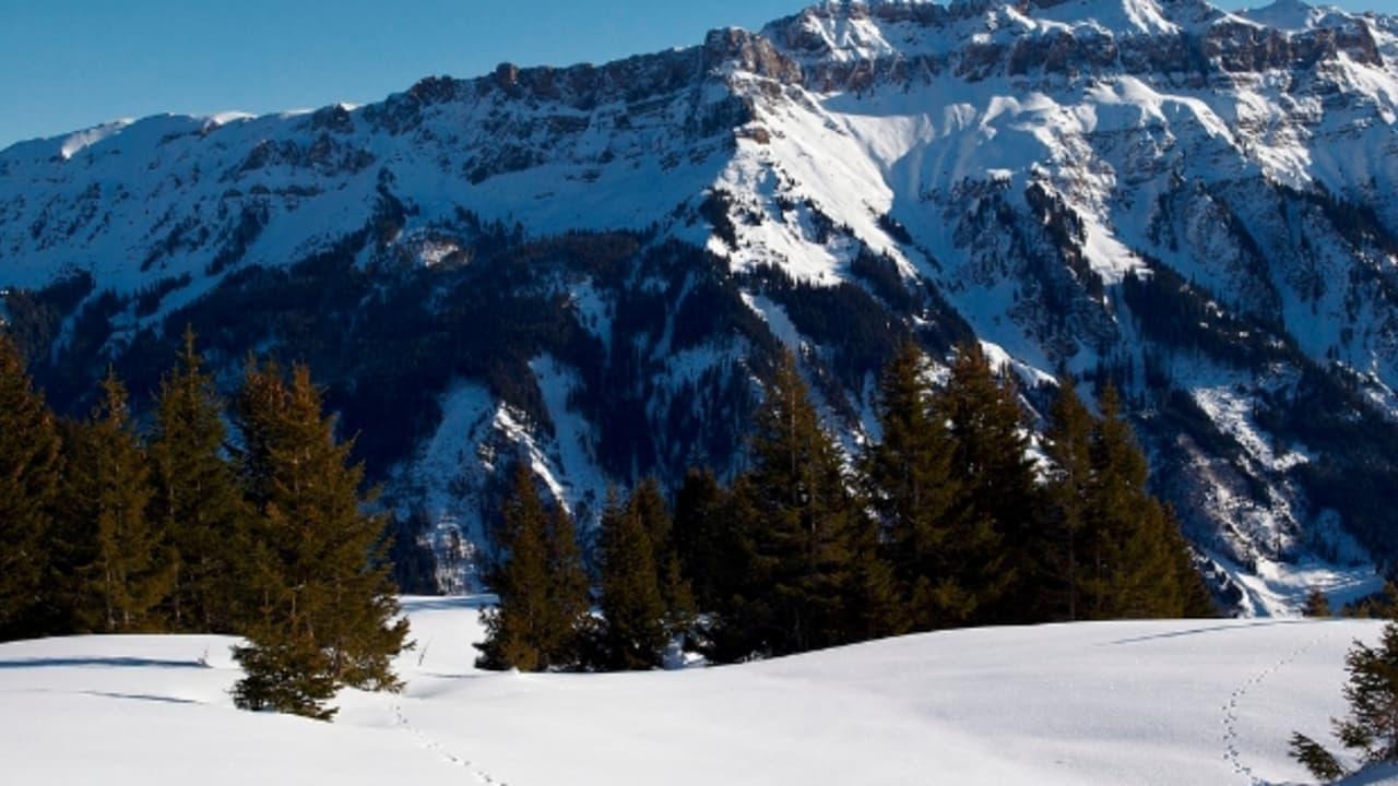 Tierspuren im unberührten Schnee bei Flumsberg (Foto: ontourwithben)