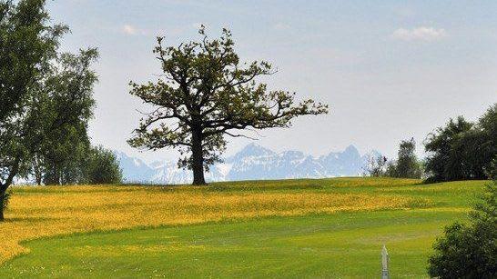 GC zu Gut Ludwigsberg - Golfclub in Türkheim
