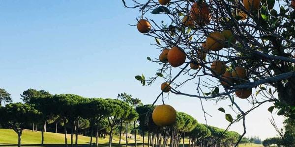 Bei der Runde auf dem Laranjal Kurs spielt man auf dem Gelände einer alten Orangen-Plantage. (Foto: Kathrin Ivenz)