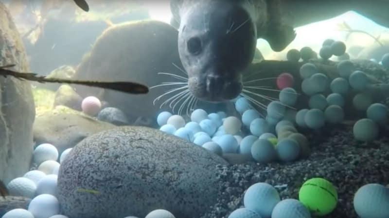 Die junge Taucherin, Alex Weber, machte eine erstaunliche Entdeckung und fand zehntausende Golfbälle im Meer. (Foto: YouTube/The Plastic Pickups)