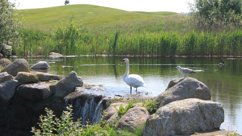 Golfplätze sind auch Lebensraum für viele Tierarten. (Foto: Ostsee Golf Resort Wittenbeck)