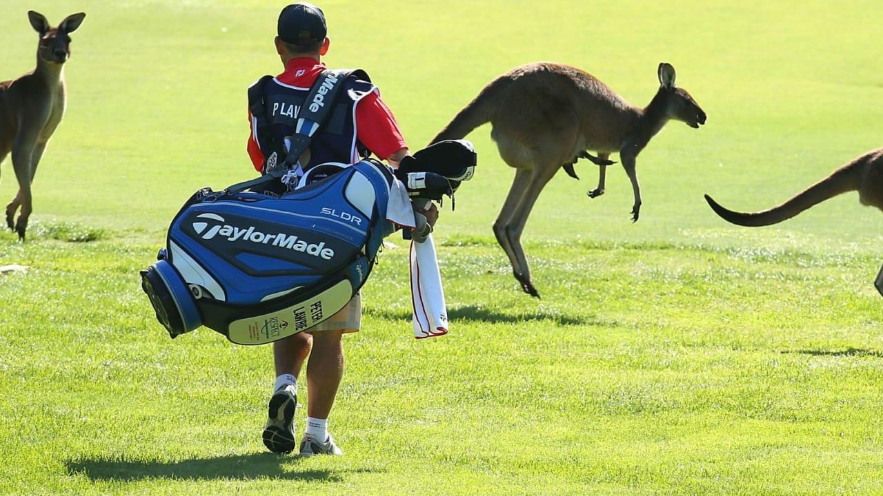 Känguru im Golf-Video