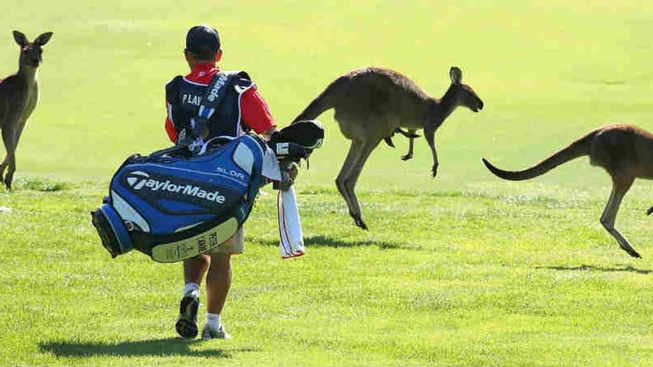 Känguru-Alarm. Diese Woche verschlägt es European Tour und LPGA nach Australien. Die Wochenvorschau. (Foto: Getty)