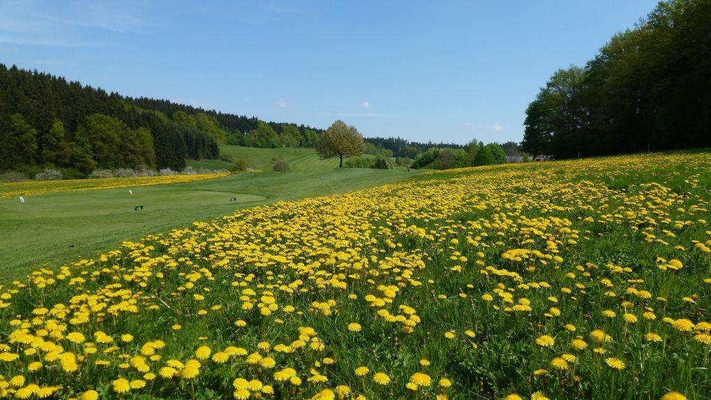 Golfplatz in Furth bei Landshut