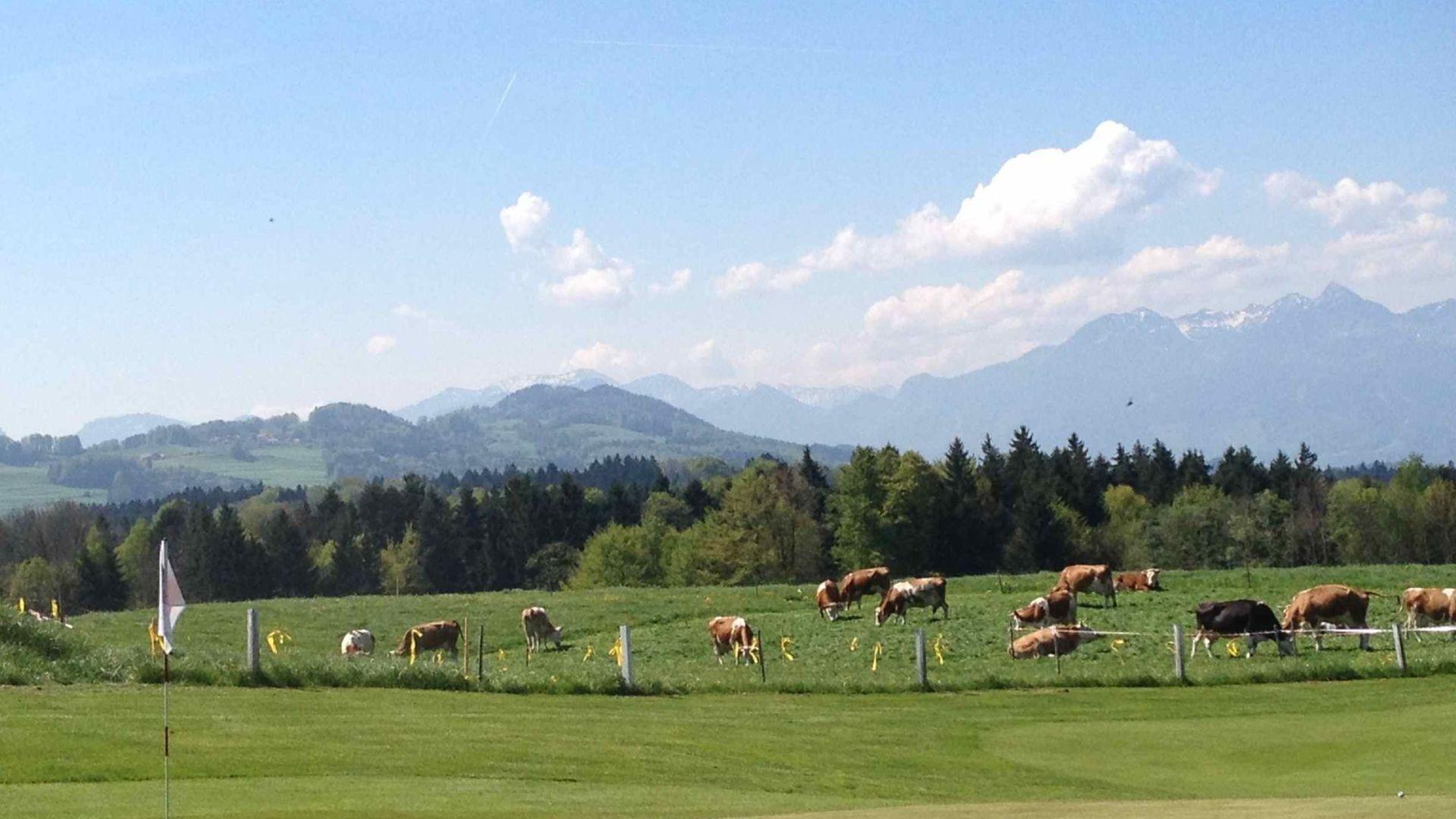 Golfplatz in Riedering