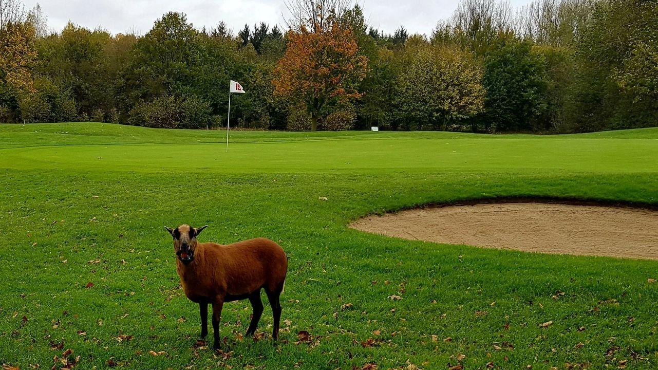 golfclub unna fröndenberg