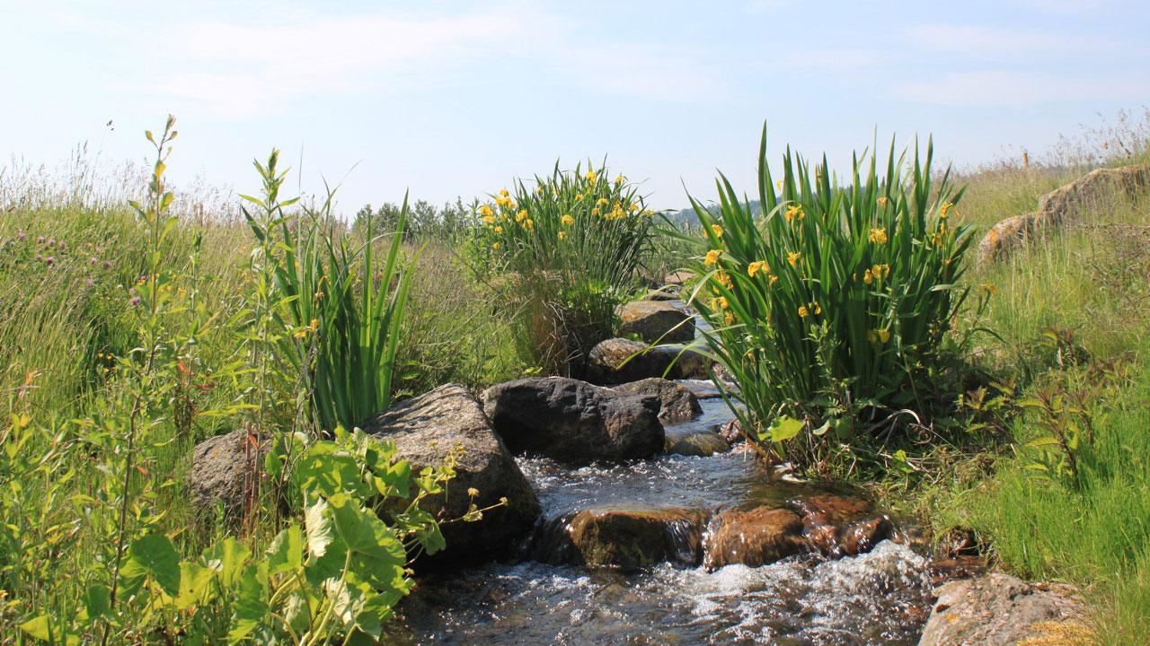 Nicht nur fürs Auge gut: Bachläufe helfen auch Flora und Fauna. (Foto: Ostsee Golf Resort Wittenbeck)