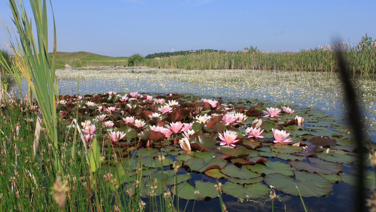 Pflanzen, Tiere und des Golfers Seele - alle profitieren gleichermaßen. (Foto: Ostsee Golf Resort Wittenbeck)