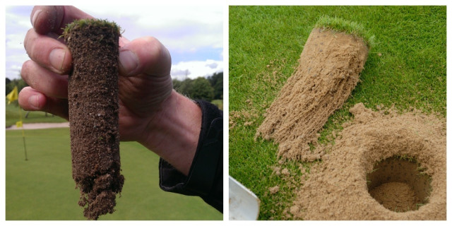 A soil sample shows the depths of turf rooting