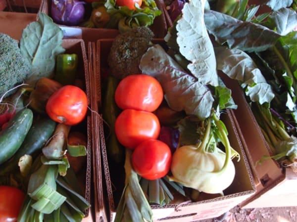 Stone Garden Farms Oak haven table bar new haven ct farms stone garden farms shelton ct workwithnaturefo