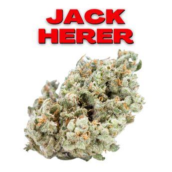 GT Jack Herer 8th (THC 23.28%)