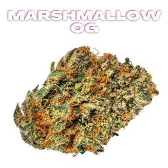 GT Marshmallow OG 8th (THC 25.41%)
