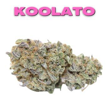 GT Koolato 8th (THC 26.66%)