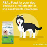 Active Pet Wellbeing Coupon Codes & Deals for February 12222