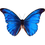 Butterfly & Nature Gift Store coupons