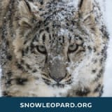 Snow Leopard Trust coupons