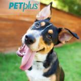Pet Plus coupons