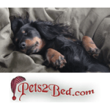 Pets2Bed.com coupons
