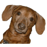 What's Up Dox Dachshund Shoppe coupons