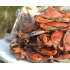 The Crab Place coupons and coupon codes