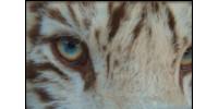 Tiger Stripes Exotic Animal Sanctuary