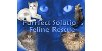 Purrfect Solutions Feline Rescue
